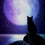 Wer sind die Clan Anführer? Im Mond-Clan Silberstern Im Frost-Clan Schimmerstern Im Himmel-Clan Windstern Im Nacht-Clan Rehstern
