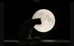 Im Mond-Clan ist das so... Im Mond-Clan sind die Katzen schnell wendig und geschickt. Ihr Lieblingsessen ist Fisch und Vogel. Diese Katzen haben öfte