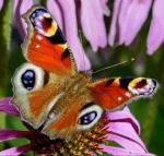 Los geht's mit einem einfachen Schmetterling ;-) Das ist?