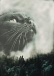 ((bold))Kapitel 14((ebold)) Ich öffnete die brennenden Augen. Um mich herum drängten sich Katzen. Was? Müde schloss ich die Augen wieder. Wo war J�