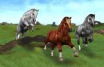 Kümmerst du dich um deine Pferde?
