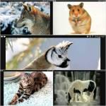 Wie groß soll dein Tier sein?