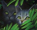 Welche Prophezeiung hat man der dritten Katzen gesandt, um erkannt zu werden?