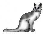 Wie hieß die dritte Katze mit ihrem kompletten Namen?