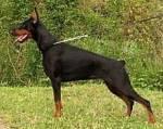 Welche Hundegröße passt zu dir?