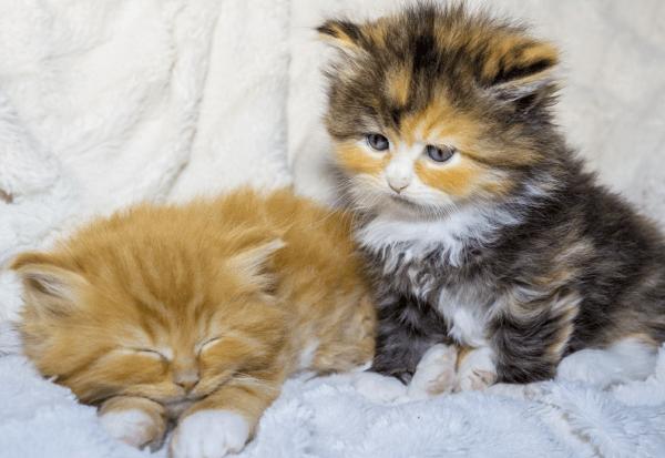 Die Süßesten Babykatzen Bilder