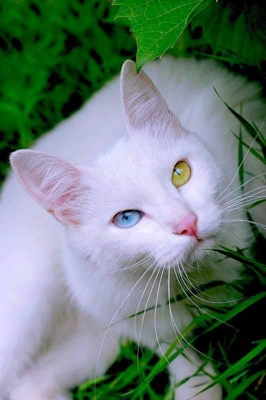 Rauchfell Warrior Cats