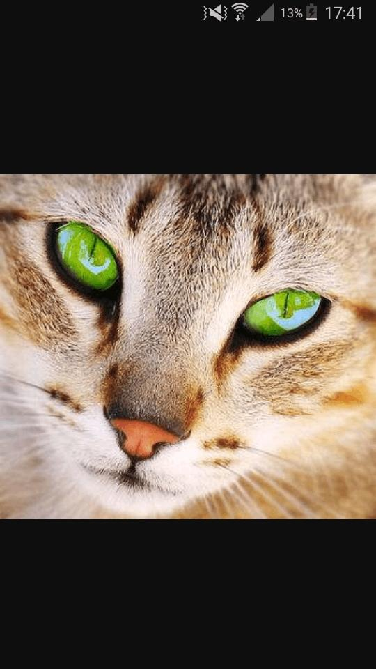 Warrior Cats Folge  Teil