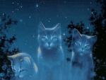 ((big)) Der SternenClan((ebig)) Name: Himbeerjunges Geschlecht: m Alter: 1 Mond alt geworden Rang: Junges Aussehen: sandfarbenen Kater mit hellbraunen
