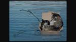 Saatpfote ertrank, weil sie von einem Fuchs in den See geschleudert wurde.