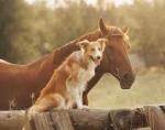 Deine Lieblingstiere sind Pferde.