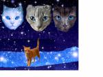 @Funkensee Ist diese Katze besser?