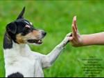Wie viel Zeit hättest du pro Tag für dein Haustier?