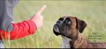 Hättest du genug Durchsetzungsvermögen und Ehrgeiz das Tier zu erziehen?