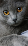 Warrior Cats, dein Leben RPG