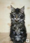 Warrior Cats Wahr oder Lüge
