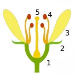 Wie heißen die einzelnen Bestandteile der Pflanze?