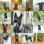 Ava Nova's Hund:
