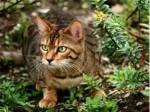 Name: Efeuregen Geschlecht: Weiblich Rang: Königin Alter:65 Monde Seelentier: Hirsch Aussehen: Mittelgroße, wendige, schlanke, hellbraune Kätzin mi