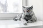 Die meiner Meinung nach schönsten Katzenrassen