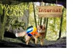 ((unli))Regeln (((bold))unbedingt((ebold)) durch lesen!)((eunli)) 1. Niemand betritt den dunklen Wald, wegen den Streunern im Wald (Natürlich gibt es