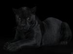 Sieben Worte - Der Panther