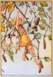 ((olive))Rosenherz*((eolive)) MINNA Silber Birke Wald lieblich, zart, mutig, schlau, schnell wütend