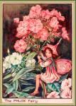 ((maroon))Barbla((emaroon)) BARBLA Phlox Garten Sehr Mutig, sehr klug, sehr lustig