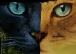 ((big))Die Rollen((ebig)) ((unli))Eingenommener:((eunli)) Diese Katzen sind von bösen Kriegern eingenommen wurden. Schreibt bitte in den Steckbrief,