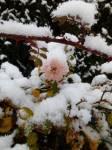 Der Winter eskaliert?