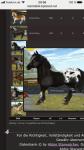Welches Star Stable Pferd passt zu dir?