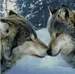((big))((bold))Die Verhältnisse((ebold))((ebig)) Geschwister = ♣ Freunde =♦ Feinde = ♠ Gefährten = ♥ Verliebt in = ♥-> Fire (W) = ♥-&