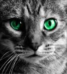 ((big)) Mondnacht ((ebig)) Alter: 5 Blattwechsel Rang: Heilerin Geschlecht: Weiblich Aussehen: gräulich, Silber mit grünen Augen. Größe: Eher klei