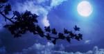 ((fuchsia)) ((unli)) die Prophezeiung ((eunli)) ((efuchsia)) Beim Wechsel der hellsten Nacht und des dunkelsten Tag wird sich die Macht Sechser offenb