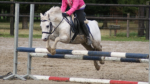 Gespielt von: Ina Ganzer Name: Speedy Rufname: Speed Alter: 5 Jahre Geschlecht: Wallach Rasse: Welsh Pony Besitzer: Susen Zuchtpferd: nein Charakter: