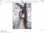 Welche Rasse ist das Pferd auf dem Bild?😍