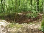 Unser Territorium: ----------------------------------- Wir leben in einem kahlen Wald, mit so gut gar keiner Beute. Und wen es Beute gibt, dann meist