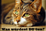 Was würdest DU tun? (Warrior Cats)
