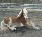Pferde sind treue Begleiter