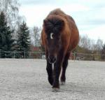 So die letzte Frage (tut mir Leid, dass es so leichte Fragen waren): Bekommen Pferde Winterfell?