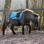 1 Mal in der Woche das Pferd bewegen reicht vollkommen aus