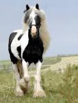 ((big))((teal))Julia((ebig))((eteal)) Name: Julia Kolb Alter: 12 Charakter: nett, abenteuerlustig, zerstreut, Reitstunden: Ja Pferd: Ja Allergien: Hun