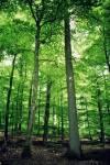 Also, erstmal ein paar Hintergrundinformationen über den BaumClan: Sie leben in einem dichten Laubwald auf einer Lichtung mit Büschen Drumherum. Die
