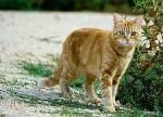 Name: Löwenglut Geschlecht: männlich Rang: Krieger Clan: Rache Clan Aussehen: Er ist Gold gestreift mit grünen Augen Art: Flugkatze Charakter: Er i