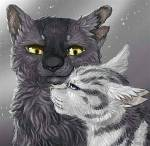 Meine Top 10 Warrior Cats Katzen