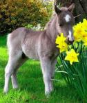 Unschuldstest mit Pferden