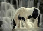 Ist dir schon mal ein Pferd ausgebüchst?