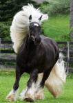 Hat dein Pferd schon mal etwas kaputt gemacht, während du eigentlich hättest auf es aufpassen müssen?