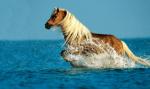 Ist dir schon mal ein Pferd auf den Fuß getreten?