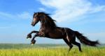 Wurdest du schon von einem Pferd getreten?